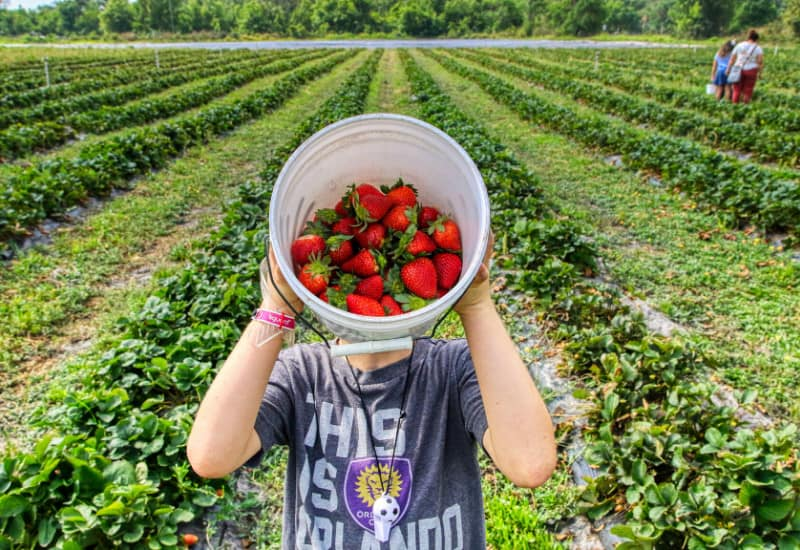 Best Berry Picking in Jackson County Michigan