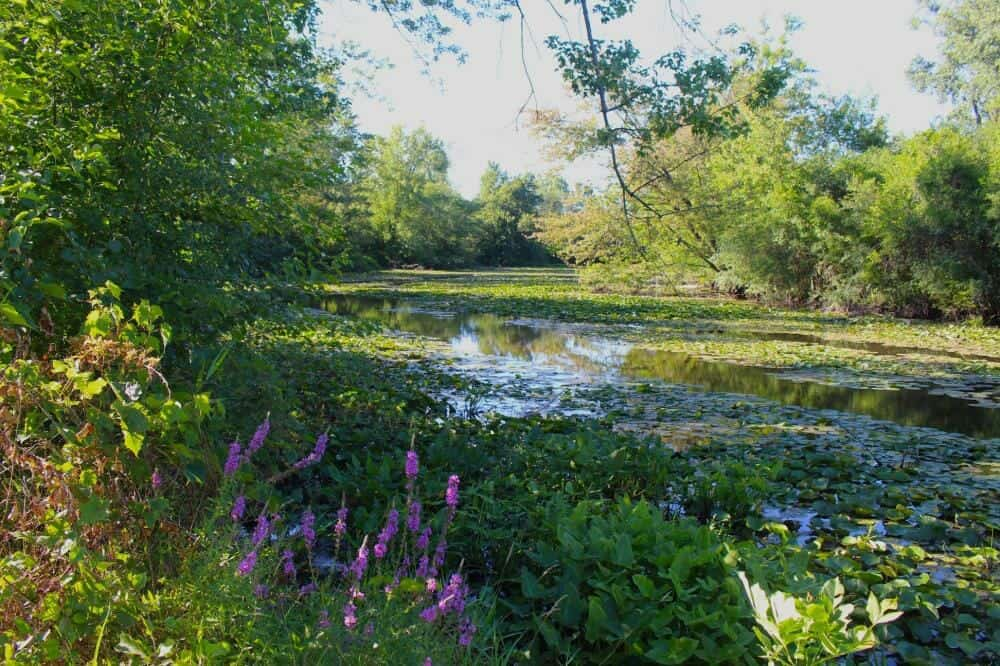 Grand River through Ella Sharp Park Jackson Michigan