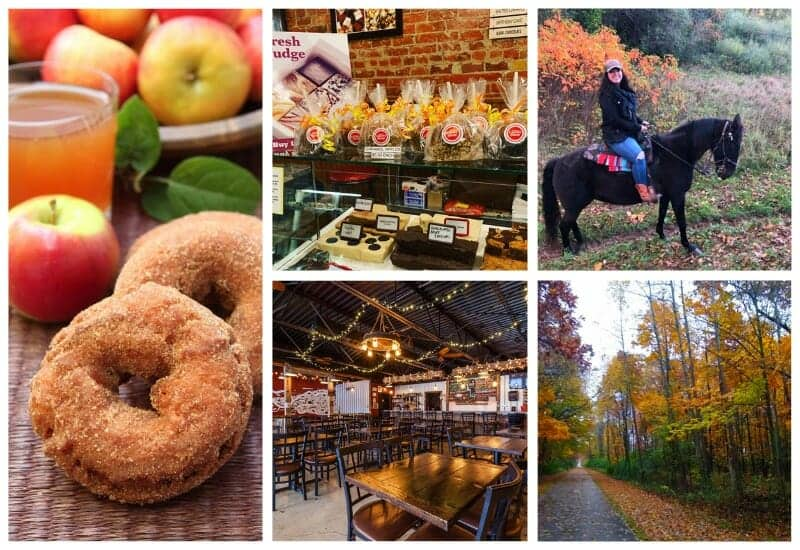 Orchards, Ironbark Brewing, and Horse Rider in Jackson Mi