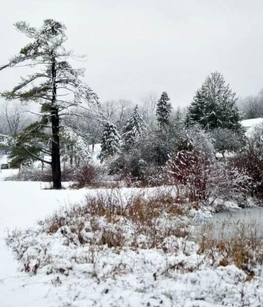 snow-covered Cascades Parkk // photo via @mrf_photography