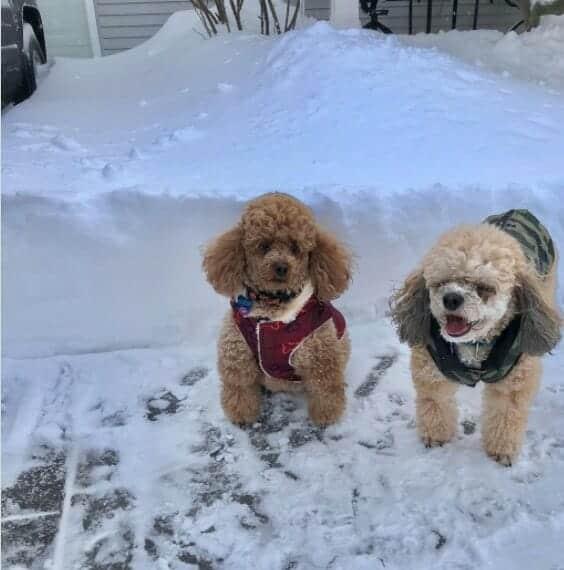 Snow Dogs in Jackson Michigan